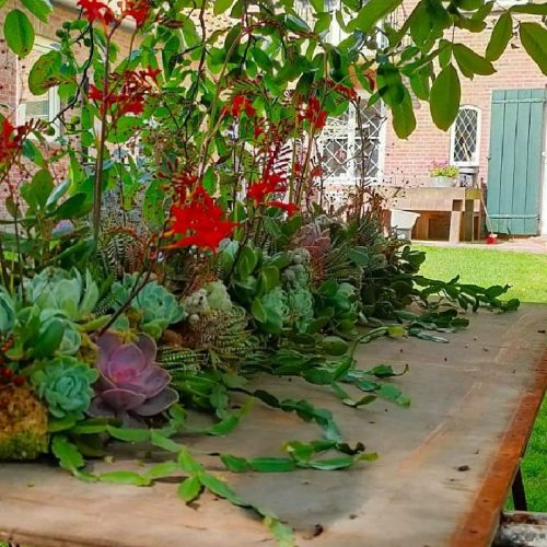 succulent kistbedekking